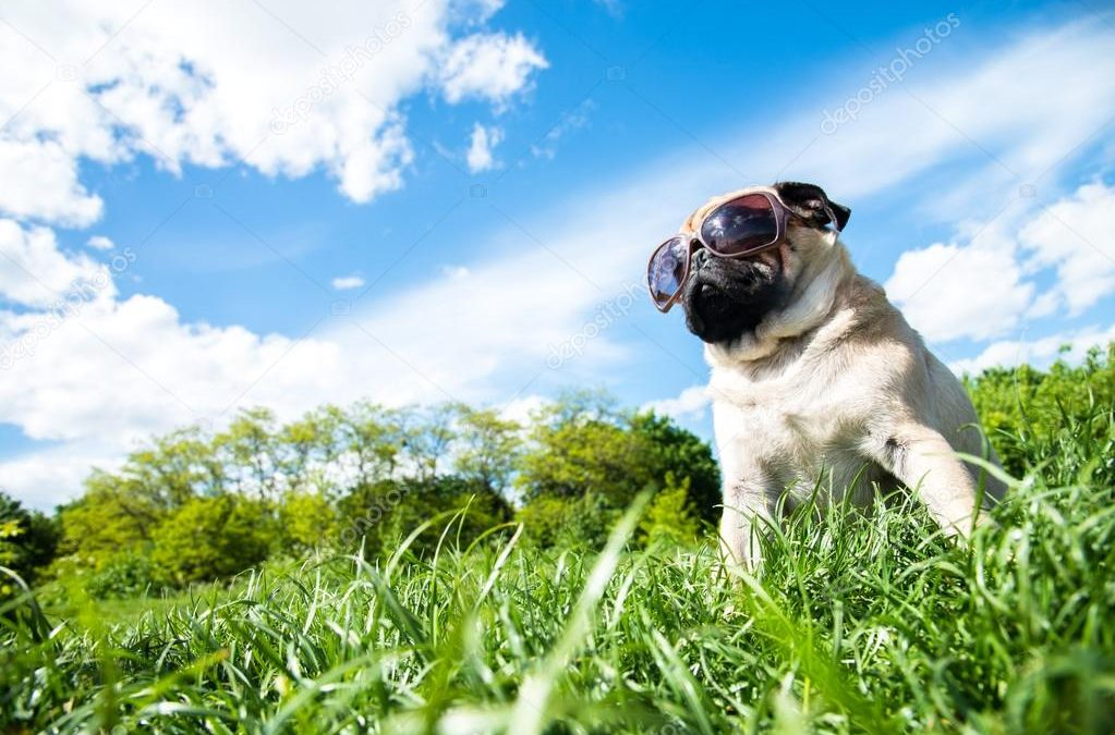 Foster or Adopt a Rescue Animal in Southwest Michigan