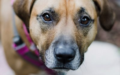 Pet Separation Anxiety After COVID-19