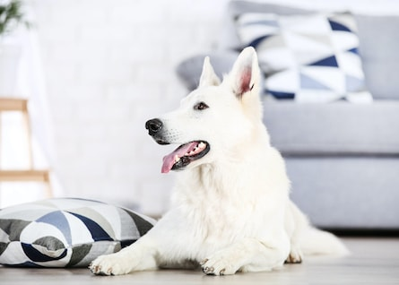 Canine Enrichment: Give Your Dog a Hobby!
