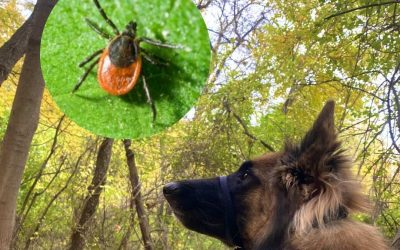 Tick Prevention and Removal for Dogs